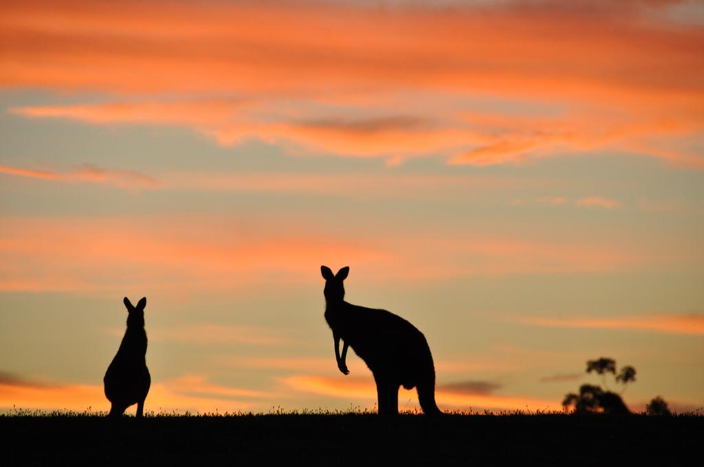 Australië goud